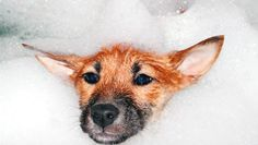 Can You Substitute Dog Shampoo