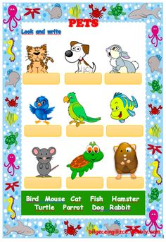 PETS (with video) drag and drop exercise Language: English Level/group: Elementary School subject: English as a Second Language (ESL) Main content: Animals Other contents: pets Animal Riddles, Animal Worksheets, 2nd Grade Worksheets, Worksheets For Kids, Color Unit, Wheels On The Bus, Classroom Language, Interactive Activities, School Subjects