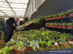 Jonathan Hogarth, of Hogarth Hostas, pictured tending to his display of small and miniature Hostas, at the RHS Chelsea Flower Show Chelsea 2016, Hampton Court, Chelsea Flower Show, Miniature, Pumpkin, Nursery, Display, Garden, Flowers