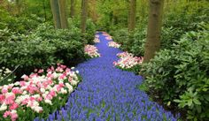 Giant flower garden in the Netherlands. Look at the other pictures!