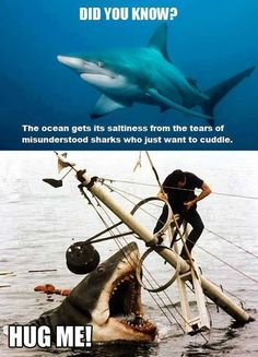 Funny pictures about Sad Misunderstood Shark. Oh, and cool pics about Sad Misunderstood Shark. Also, Sad Misunderstood Shark photos. Funny Cute, Funny Jokes, Funny Stuff, Super Funny, Memes Humor, Humour Quotes, Funny Comedy, Comedy Films, Funny Animals