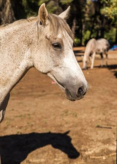 Ranch-Eros Farm: Close Encounters with Animals Close Encounters, Ranch, Horses, Animals, Guest Ranch, Animales, Animaux, Horse, Animal Memes