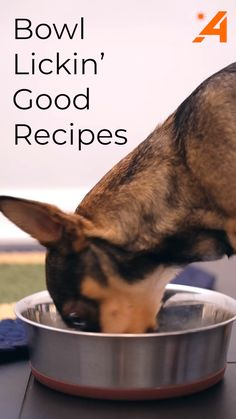 DIY Dog Food is the Smarter Healthier way to feed