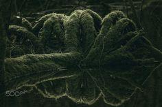 the foam tree - L'arbre en mousse - the foam tree - L'arbre en mousse