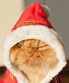 Uh-oh! Santa Cat does not look happy.