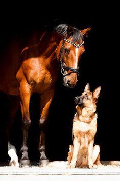 """Zwei Tiere, eine Sprache - """"Tierisch"""""""