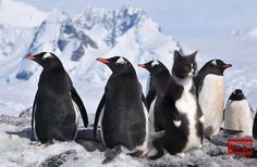 Fluffy had lived with penguins too long!