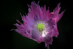 My favorite colour by Mavricka  on 500px