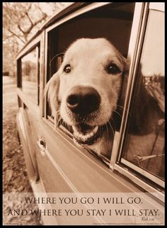 Nothing makes me smile more than seeing a dog with his head out of the car window...