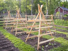 Squash, pumpkin and cucumber trellises ready to be climbed