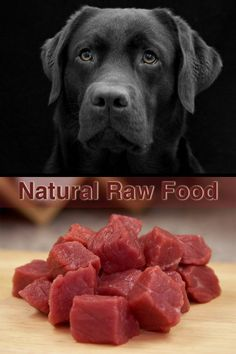 Cat Nutrition Guide Raw Feeding is a complete guide to feeding a natural raw diet to Labradors and other medium and large breed dogs. - Raw Feeding is a complete guide to feeding a natural raw diet to Labradors and other medium and large breed dogs. Dog Raw Diet, Raw Food Diet, Dog Nutrition, Animal Nutrition, Nutrition Guide, Healthy Nutrition, Make Dog Food, Homemade Dog Food, Pet Food