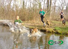 Canicross competition. I really want to do this one day. Basically it is cross country with canines.
