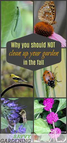 6 reasons why you'll want to skip this year's fall garden clean up.