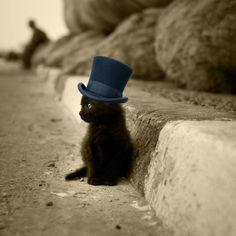 It's a kitten with a top hat. I REPEAT: IT IS A KITTEN WITH A TOP HAT!!!