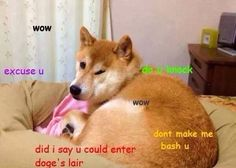 Awesome Doge: March 2014
