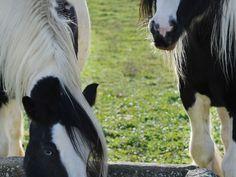 i nostri cavalli - our horses