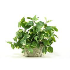 D&W Silks Pothos in Oblong Ceramic Planter (Pothos), Green #127068