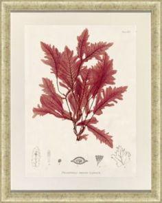 Accessories, Bradbury Seaweed Framed Art II, Accessories | Havertys Furniture