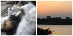 Spend your summer in #hanoi #vietnam FREE via petsitting 2 adorable (shy) cats, see details by clicking on the image above!