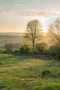 Dartmoor — New leaf, catching the last light. Beautiful World, Beautiful Places, Image Nature, Dartmoor, English Countryside, Nature Pictures, Country Life, Modern Country, Country Living