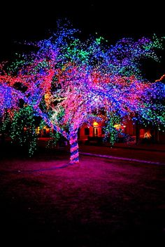 The Magic Tree…Columbia, Missouri…it's truly magical. Parents – you need to … – Outdoor Christmas Lights House Decorations Christmas Music, Little Christmas, Vintage Christmas, Christmas Time, Exterior Christmas Lights, Outdoor Christmas Decorations, Light Decorations, Backyard Carnival, Tinsel Tree