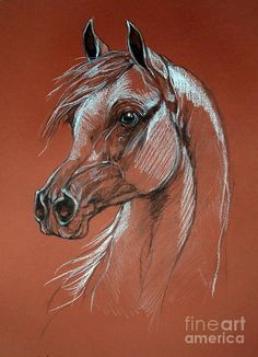 Arabian Horse Drawing Pastel by Angel  Tarantella