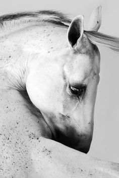www.pegasebuzz.com   Equestrian photography : Donna Demari.