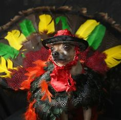 These 6 #dogs are ready for #Halloween! #costumes #pets