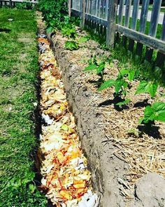 Compost trench!! This is a great way to bring #nutrients into your garden and attract lots of #worms that will add #microorganisms and #worm castings! They will also aerate your garden. Right @unclejimswormfarm? <<< Worm Castings:) #homefarmideas #idea #diy #chicken #chickens #farm #gardening #farms #farmers #farming #farmlife #garden #gardens #gardening #gardeners #mygarden #organic #organicfood #organicgardening #organics #grow #growth #growing #homestead