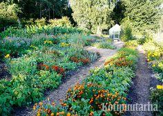 Kukat kuuluvat potageriin! Kuva Annalan keittiöpuutarhasta Helsingistä. Growing Plants, Dream Garden, My Dream, Herbs, Gardening, Houses, Veggie Gardens, Lawn And Garden, Herb