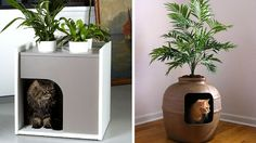 5 ways to hide your cat& litter - - - - 5 solutions pour cacher la litière de son chat – 5 ways to hide the litter of your cat Son Chat, Yorky, Pets For Sale, Giant Flowers, Cat Furniture, Dog Houses, Diy Stuffed Animals, Cat Life, Storage Spaces
