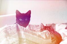 Cats — Filter: Toronto
