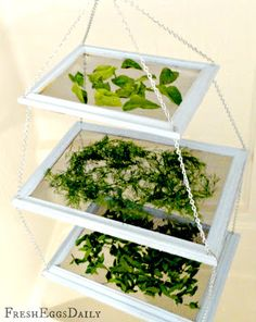 Fresh Eggs Daily®: DIY Tiered Herb Drying Rack Using Repurposed Picture Frames Plus Dried Herbal Supplement for your Chickens