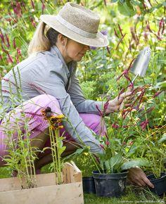 Les plantations de printemps en 13 questions - réponses   Détente Jardin Site Art, Pot Plante, Plantation, Questions, World, Spring, Contentment, Cottage, Nature
