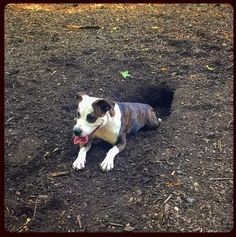 Carolina Pines Dog Park Raleigh Nc