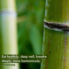Eat healthily, sleep well, breathe deeply, move harmoniously. -Jean-Pierre Barral- Photo by Kenny Louie. A poster from LIFE IS BEAUTIFUL app - available on iTunes.