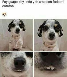 Mexican Funny Memes, Mexican Humor, Funny Spanish Memes, Spanish Humor, Animals And Pets, Cute Animals, Memes Lindos, Laughing Jokes, Cute Memes