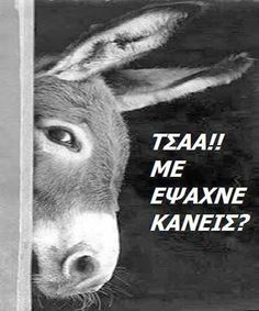Jokes Images, Funny Images, Funny Pictures, Funny Greek Quotes, Funny Quotes, Ancient Memes, Colors And Emotions, Always Smile, Funny Cartoons