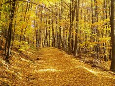 slovensko na jeseň - Hľadať Googlom Aurora Borealis, Scenery, Country Roads, Colors, Outdoor, Northern Lights, Outdoors, Northen Lights, Landscape