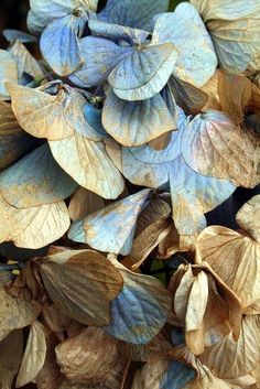 Dried hydrangeas? The blues and tans are so beautiful together