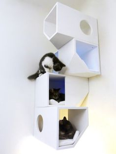 Catissa cat playground