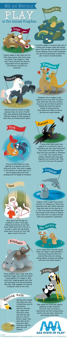 How Animals Entertain Themselves - Infographic