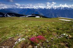 Olymic Mountains, Washington State