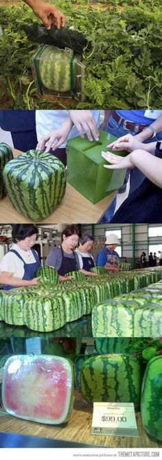 Square Watermelons Made in Japan…