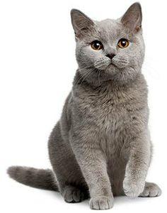 fluffy #cat