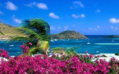 Floral Seaside
