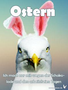 Die 196 Besten Bilder Zu Frohe Ostern In 2020 Frohe Ostern
