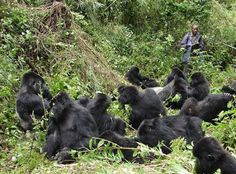 4 Days Rwanda 2 Gorilla Treks Safari