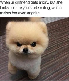 Tail-Wagging Dog Memes To Help Fill The Void - World's largest collection of cat memes and other animals Funny Shit, Stupid Funny Memes, Funny Relatable Memes, Funny Love, Funny Men, Funny Quotes, Funny Stuff, 9gag Funny, Fun Funny