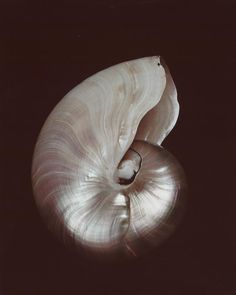 Edward Weston, Nautilus Shell, Mood, Patterns In Nature, Natural Forms, Art Sketchbook, Life Photography, Under The Sea, Sea Shells